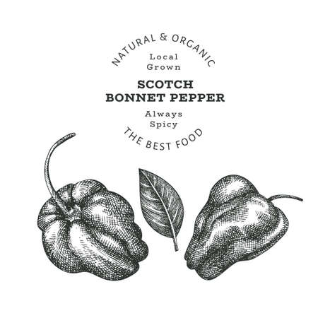 Illustration for Hand drawn sketch style scotch bonnet pepper. Organic fresh food vector illustration isolated on white background. Retro plant illustration. Engraved botanical style cayenne pepper. - Royalty Free Image
