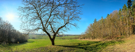 Foto de Alone tree an sunny day early spring - Imagen libre de derechos