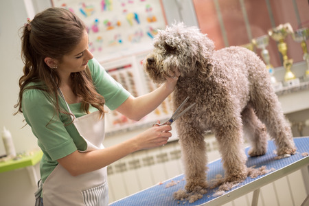 pet grooming with scissors made  hairstyle