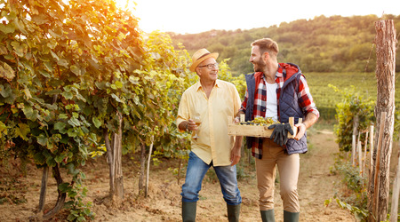 Photo pour Family in vineyard celebrating harvesting grapes- father and son - image libre de droit