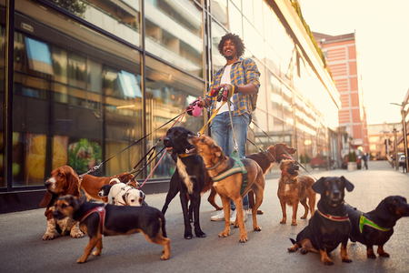 Photo pour professional dog walker man in the street with lots of dogs - image libre de droit