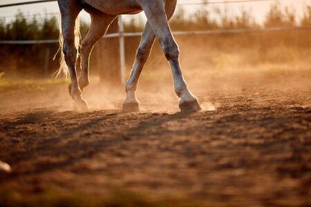 Photo pour horse foot hoof run outdoor stables - image libre de droit