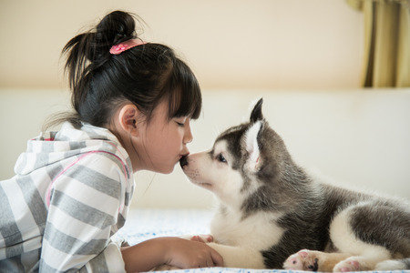 Little asian girl kissing a siberian husky puppy on bedの写真素材