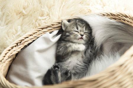 Cute tabby kitten sleeping in a basket