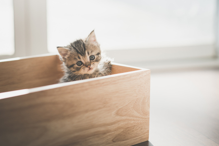 Photo for Cute kitten playig in a wooden box under sunlight - Royalty Free Image