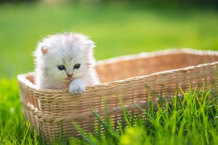 Foto de Cute kitten playing in wicker basket on green grass outdoors - Imagen libre de derechos