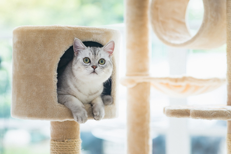Photo for Cute cat lying on cat tower - Royalty Free Image