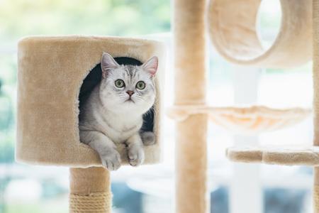 Photo pour Cute cat lying on cat tower - image libre de droit