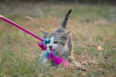 Foto de Cute kitten playing toy in the garden - Imagen libre de derechos