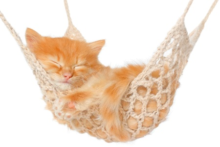 Cute red haired kitten sleeping in hammock on a white background.