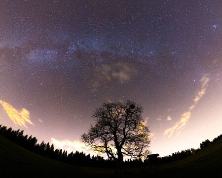 Photo for The Milky Way captured wide-spread along with the treetops with a yellow-orange glow on the horizon and lots of stars in the sky during a full night. - Royalty Free Image
