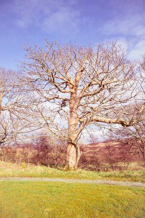 Photo pour Big old tree in a park - image libre de droit