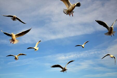 Photo for Birds in the sky - a flock of flying seagulls against pale blue sky - Royalty Free Image