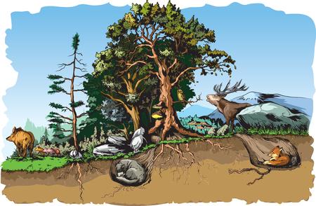 Animals forest habitat