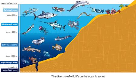Illustration pour Layers of the ocean - image libre de droit
