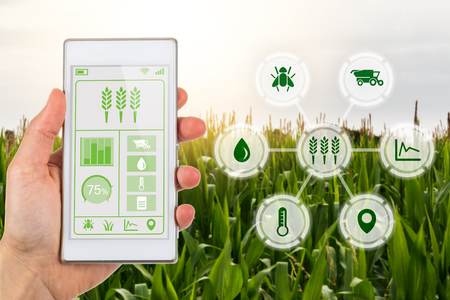 Foto de Concept for agritech industry showing farmer with smartphone app and graphic display with agricultural smart farm icons on a bakcground of a field of crops. - Imagen libre de derechos
