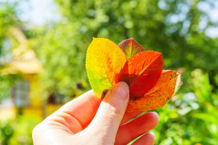 Photo pour Closeup natural autumn fall view of woman hand holding red orange leaves on blurred green background in garden or park. Inspirational nature october or september wallpaper. Change of seasons concept - image libre de droit
