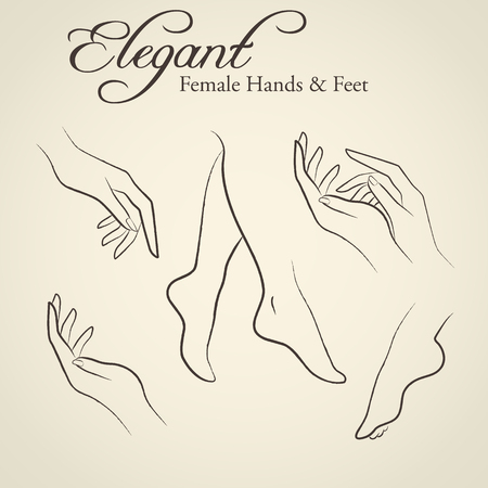 Illustration pour Set of elegant silhouettes in a linear sketch style (female hands and feet). Design elements for skin care industry - image libre de droit