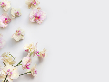 Flat lay composition with orchid flowers and space for text or artwork, white background. Light top view photo for business