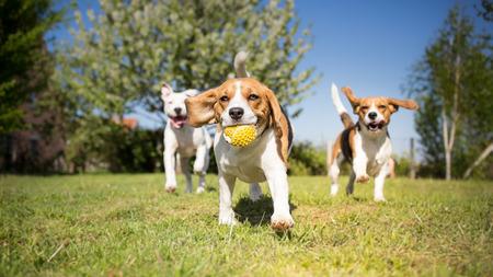 Foto de Group of dogs playing in the park - Imagen libre de derechos