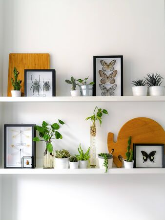 Photo pour White hanging shelves with numerous plants and framed taxidermy insect art such as butterflies, beetles and dragonflies - image libre de droit