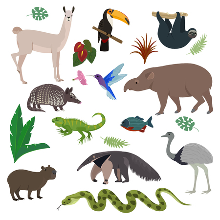 Illustration pour Animal in South America vector wild animalistic mammal character capybara tapir toucan in southern wildlife illustration set of tropical lizard colibri isolated on white background. - image libre de droit