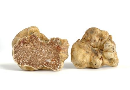 Photo pour close-up of white truffle (tuber magnatum) isolated on white - image libre de droit