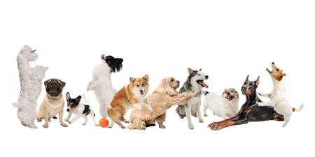 Photo pour Creative collage of different breeds of dogs isolated over white background. - image libre de droit