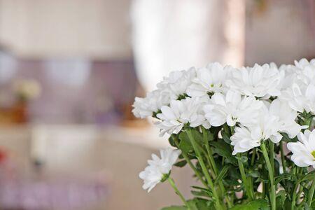 Foto für Bouquet of white chrysanthemums close-up on a blurred background inside the home environment. Copy space - Lizenzfreies Bild