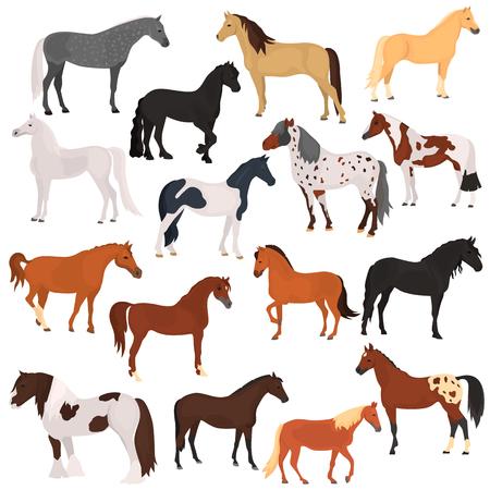 Ilustración de Horse breeds color flat icons set - Imagen libre de derechos