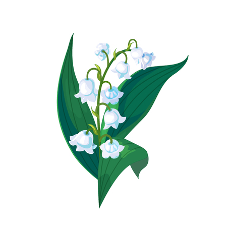 Illustration pour Lilly of the valley - May bells, Convallaria majalis with green leaves on a white background.Spring flower.Hand drawn realistic vector illustration. - image libre de droit