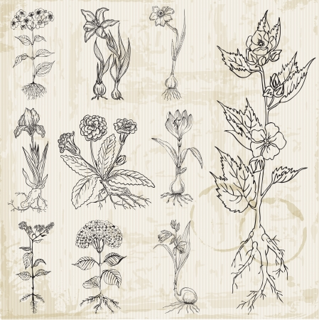 Set of Vintage Flowers - hand drawn