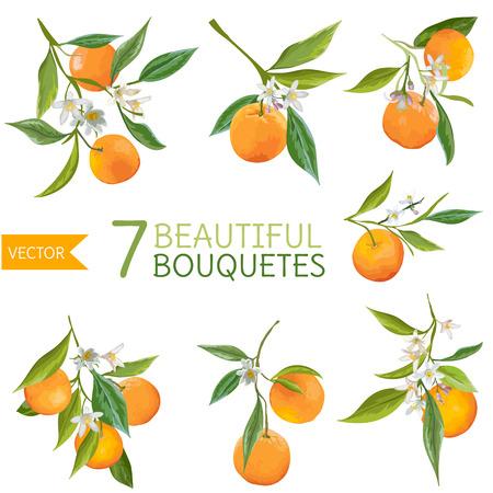 Illustration pour Vintage Oranges, Flowers and Leaves. Orange Bouquetes. Watercolor Style. Vector Fruit Background. - image libre de droit