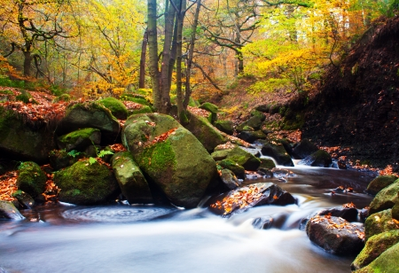 golden trees with a fast flowing stream