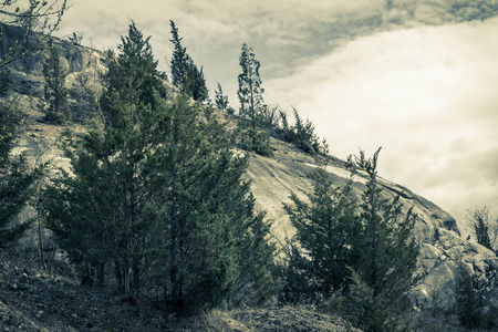 Clouds stretch across sky of evergreen tree covered hilltop