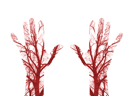 Close up human blood vessels in male hand