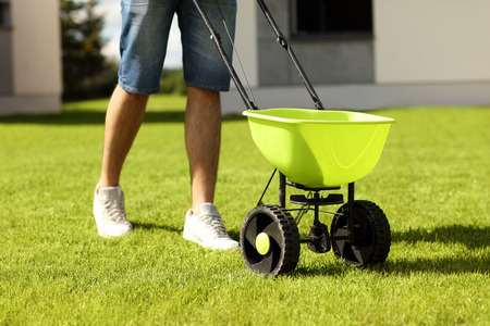 Foto per Picture of young man seeding grass in the backyard - Immagine Royalty Free
