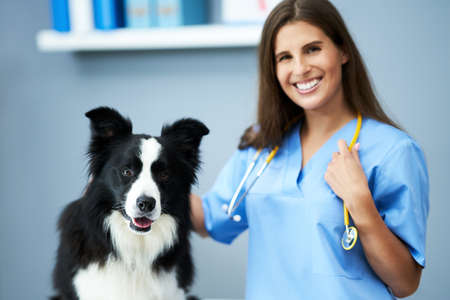 Photo for Female vet examining a dog in clinic - Royalty Free Image