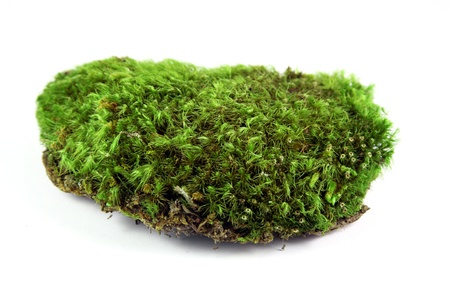 Green moss patch
