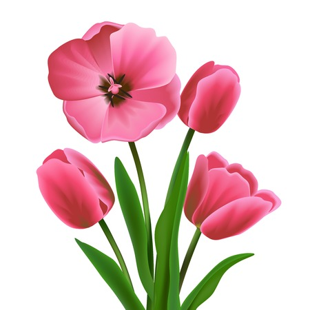Pink beautiful blossoming tulip flower bouquet realistic vector illustration