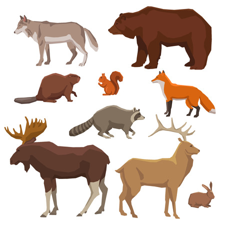 Wild forest animals bear wolf fox elk rabbit and beaver painted color icon set isolated vector illustration