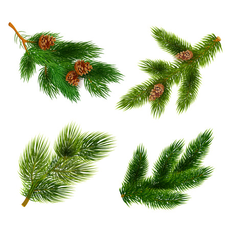 Illustration pour Pine tree branches with cones for chrismas decorations 4  icons set composition banner  realistic abstract vector illustration - image libre de droit