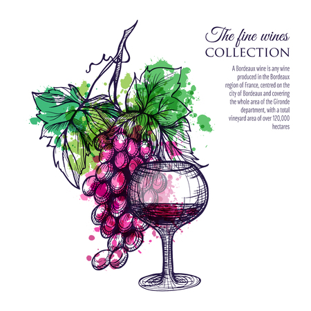 Glass of red wine with grape branch hand drawn vector illustration
