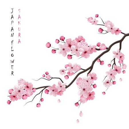 Illustration pour Realistic sakura japan cherry branch with blooming flowers vector illustration - image libre de droit