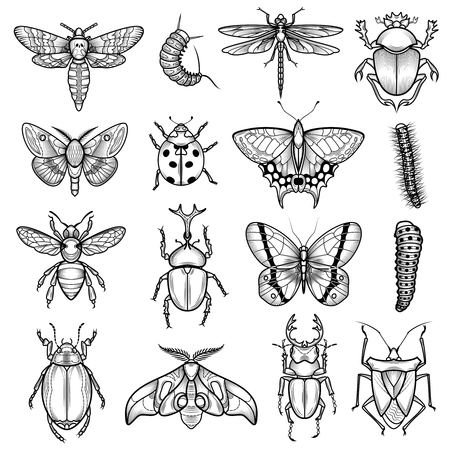 Illustration for Insects black white line icons set with dragonfly and caterpillar flat isolated vector illustration - Royalty Free Image