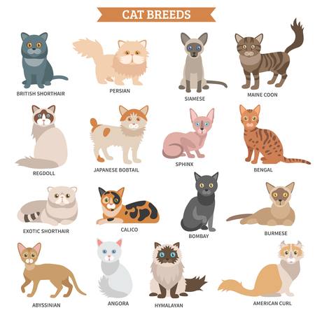 Illustration pour Cat breed flat icons set with cute animal characters isolated vector illustration - image libre de droit