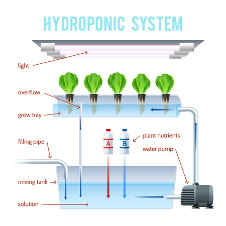 Hydroponics Colored Infographic method of growing plants on