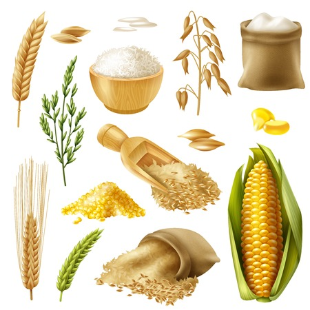 Foto per Colored and realistic cereals icon set with wheat rice barley oat corn vector illustration - Immagine Royalty Free