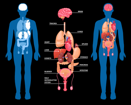 Illustration pour Human anatomy layout of internal organs in male body. Isolated on black background. Vector illustration. - image libre de droit