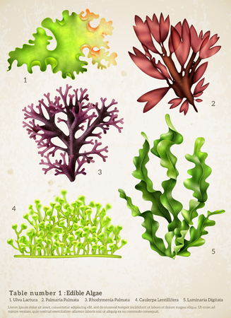 Illustration pour Realistic seaweed set with images of different underwater plants with biology text captions on paper background vector illustration - image libre de droit